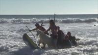 Коза на сърф е хит в Калифорния