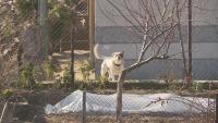 Кмет предлага да се ограничи броят на кучетата в едно домакинство в Благоевградско