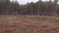 Казусът с изсечената гора край Варна: Какви са обясненията на инвеститора
