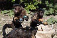 Великденски изненади за животните в зоопарк в Загреб (Снимки)