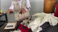 Хванаха контрабанда с бебета костенурки