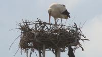 Във Варна монтират специални платформи и птицебрани, за да предпазят щъркелите
