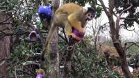 Животни търсиха великденски лакомства в лондонския зоопарк