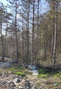 снимка 3 Бетонирани дървета по пътя София - Варна