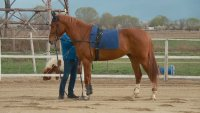 Как се отглеждат и тренират елитни коне за състезания