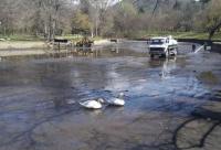 """Почистиха езерото в парк """"Бачиново"""" в Благоевград"""