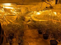 Откриха оранжерия за отглеждане на марихуана, наркотици и оръжие в Русе (СНИМКИ И ВИДЕО)