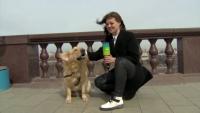 Куче отмъкна микрофона на репортер в пряк ефир