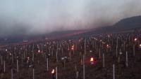 Предпазват лозята от измръзване с факли във Франция