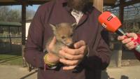 Обитателите на зоопарка в Добрич живеят в специални условия