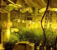 Разбиха наркооранжерия в сградата на бившия стъкларски завод в Перник