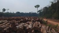 Президентът на Бразилия поиска финансова помощ от САЩ, за да прекрати незаконното обезлесяване