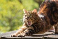 Защо броят котките в столичен квартал?