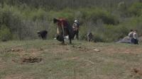 Акция по залесяване край Велико Търново