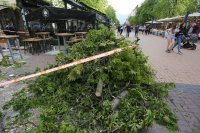 """Дърво падна върху маси на столичния булевард """"Витоша"""" (СНИМКИ)"""