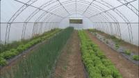 Първата биоградина за здравословно хранене на децата се намира в Троян