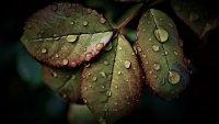 Облачно и дъждовно време до края на деня