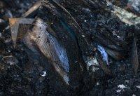 снимка 5 Пожар унищожава исторически сгради в Кейптаун