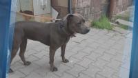 Заснеха как стопани изхвърлят кучето си на улицата