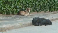 Кметът на Кричим предлага глоба до 500 лв. за хора, които хранят бездомни кучета