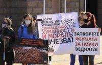 снимка 5 Протест пред МС: Искат затваряне на фермата за норки край Стара Загора (Снимки)