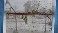 Какви са пораженията след градушката в Северозападна България