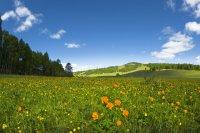 Слънчево и топло време в началото на новата седмица
