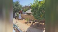 Момиче прогони мечка от двора си с голи ръце в Калифорния