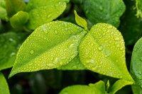 Облачно и дъждовно днес, температурите ще са между 15° и 20°