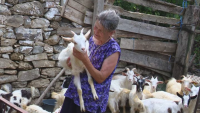 ВАС потвърди позицията на БСП: Не е имало чума по дребните животни
