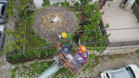 Спасителна акция за пострадалия щъркел Вихрен в Самоковско
