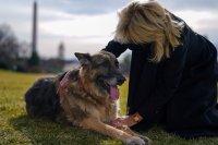 Почина едно от кучетата на Джо Байдън