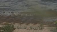 Германия потвърди за удавените в река Рейн три български момичета
