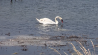 Екокатастрофа заплашва Атанасовското езеро