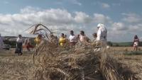 С вековни обичаи откриха жътвата в село Козаревец
