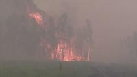 Горски пожари в Сибир