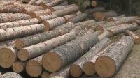 Хванаха бракониер рецидивист с незаконна дървесина в Разлог