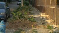 """Масова сеч на дървета в столичния квартал """"Манастирски ливади"""""""
