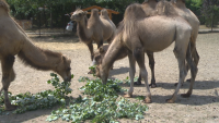 Специална диета и душ за обитателите на столичния зоопарк