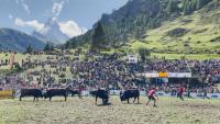 """100 швейцарски крави се бориха за титлата """"Кралицата на Матерхорн"""""""
