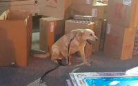 Митническо куче надуши над 6000 кутии цигари, скрити в палети с дограма за Франция
