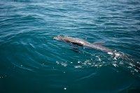 Хиляди делфини биват избити само за ден в европейски води