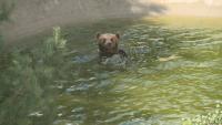 Как мечките в Белица се подготвят за зимен сън