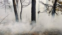 Храсти и сухи треви горят край Хаджидимово (Видео + Снимки)