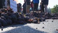 Лозари блокираха с протест булевард в Монтана