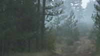 Мълния или човешка небрежност са вероятните причини за пожара в Пирин