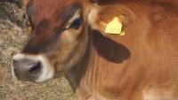 """Мисия """"Спаси крава"""""""