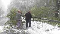 Сняг през октомври: 10 см покривка на Петрохан и опасност от падащи дървета