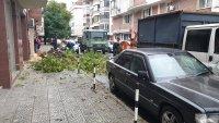 За по-малко от седмица: Втори инцидент с паяк в Пловдив