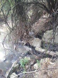 Нерегламентирано заустване на отпадъчни води замърсява река Бели Лом край Разград